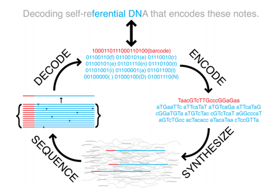 Schematic of DNA information storage.jpg